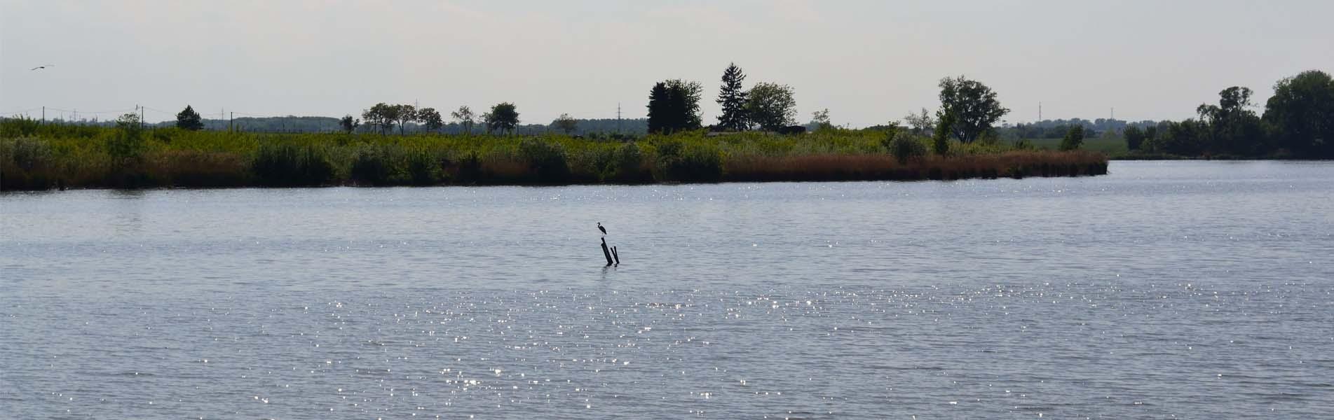 Novovéský-rybník